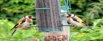 Birdroom Supplies