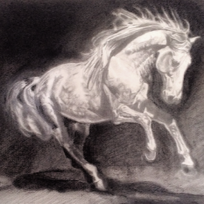 'Iberian at Liberty' Charcoal and Graphite Drawing on hot pressed watercolour paper. For Sale - click 'Original Art>Equestrian in the tabs above' for more details).